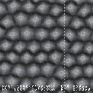 Conical structure nano pattern array